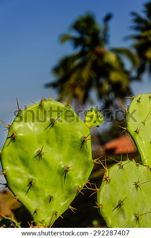 Tropical Background. Prickly pear cactus of blue sky with palms - stock photo