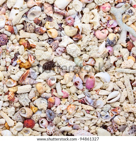 Tropical background with sea shells, coral and sand - stock photo