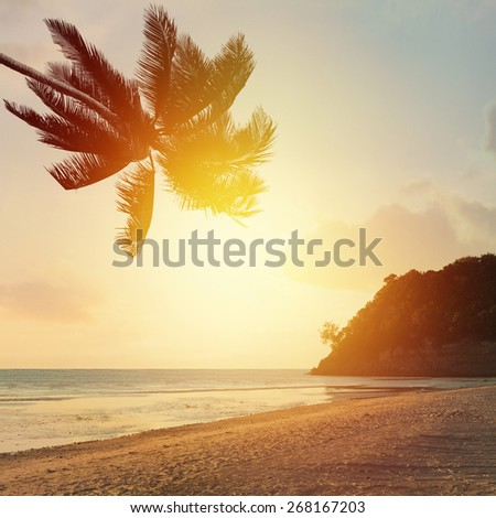 Tropical background with sunset beach and coconut palm tree, idyllic seascape. - stock photo