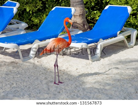 Tropical beach an pink flamingo - stock photo