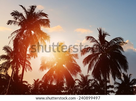 Tropical beach background. Palm tree silhouette - stock photo
