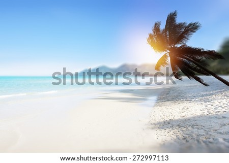 Tropical beach background with palm tree and ocean. - stock photo