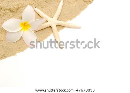 tropical beach border - stock photo