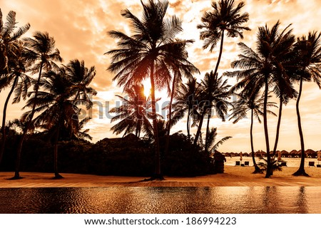 Tropical beach on sunset, beautiful postcard with palm trees silhouette on cloudy sky background, luxury summer vacation concept  - stock photo