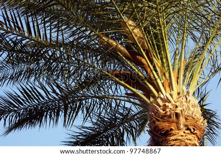 Tropical beach: sun umbrellas and palms - stock photo