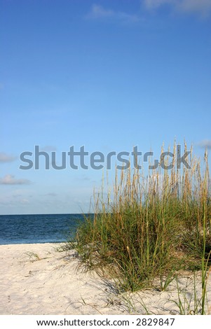 Tropical beach view with seaoats. Madeira beach Florida - stock photo
