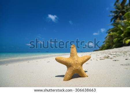 Tropical beach with a starfish on sand, sea view and sand. - stock photo