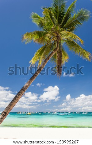 Tropical beach with beautiful palm and white sand, Boracay Island - stock photo