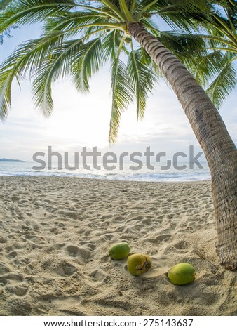 tropical beach with coconut palm. Koh Samui, Thailand Lamai Beach - stock photo