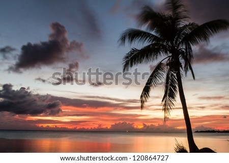 Tropical beach with coconut palm  (Moving by wind)  on silluate background - stock photo