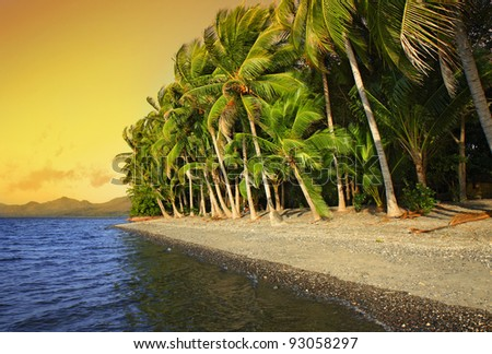 Tropical beach with coconut palm trees. Flores Island, Indonesia - stock photo