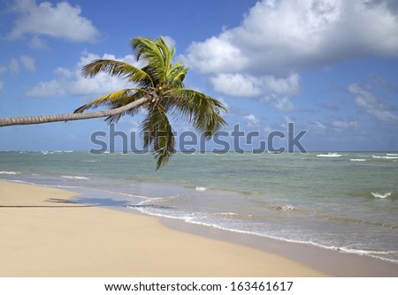 tropical beach with palm tree taken in dominican republic - stock photo