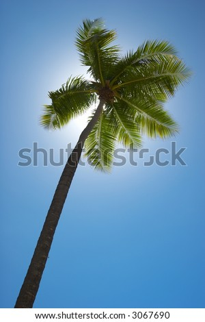 Tropical beach with Palm trees - stock photo