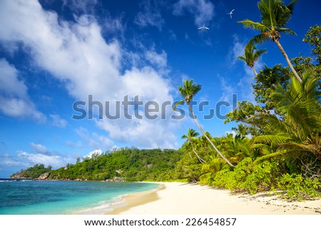 Tropical beach with palm trees in Mahe Island, Seychelles - stock photo