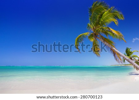 Tropical beach with palm trees in Punta Cana, Dominican Republic - stock photo