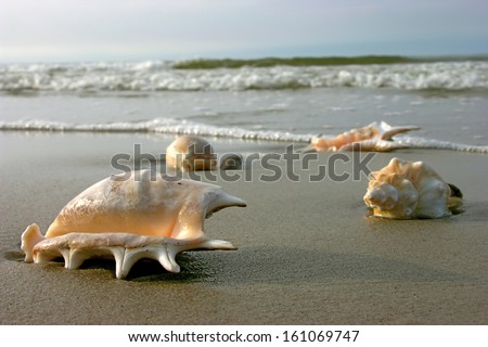 Tropical beach with shells - stock photo