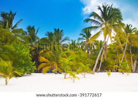 Tropical beach with white sand and palm trees in Saona Island, Dominican Republic - stock photo