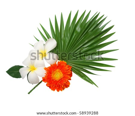 Tropical blooms on palm leaf - stock photo