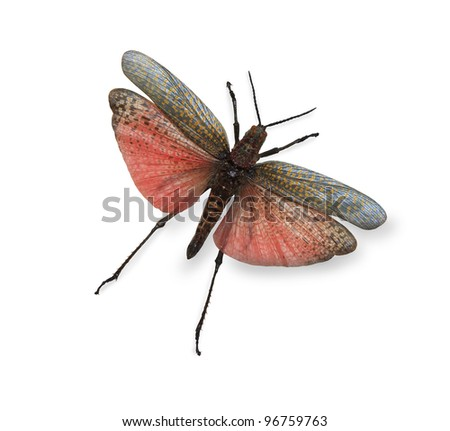 Tropical butterfly isolated on white - stock photo