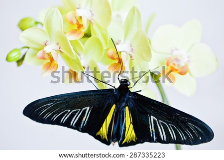Tropical butterfly on the orchid. - stock photo