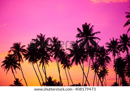 Tropical coconut palm trees silhouettes at sunset - stock photo