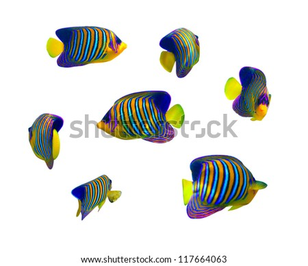 Tropical coral fish collection on white background - stock photo