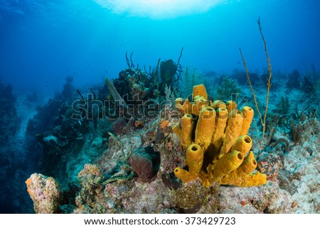 Tropical coral reef - stock photo