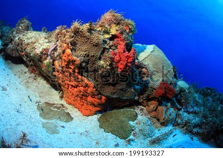 Tropical coral reef in the gulf of mexico - stock photo