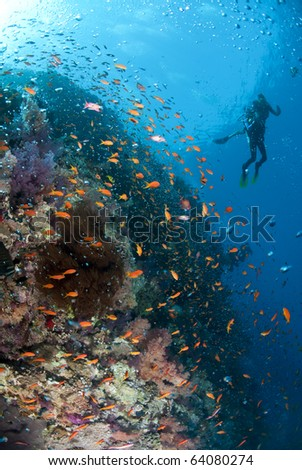 Tropical coral reef scene with bubbles and two scuba divers in the background. Shark reef, Ras Mohamed national Park, Red Sea, Egypt. - stock photo