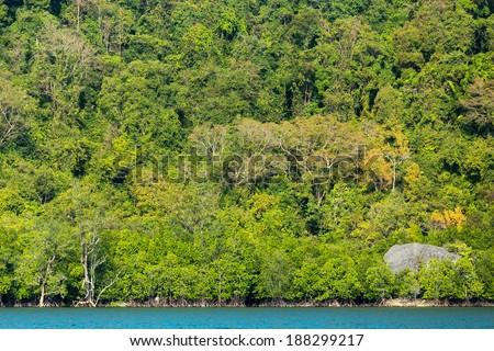 Tropical dense jungle coastline on a limestone hill, Pang Nga bay, Thailand - stock photo