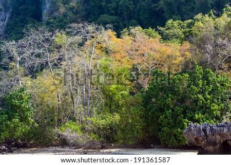 Tropical dense jungle coastline winter colors on a beach, Pang Nga bay, Thailand - stock photo