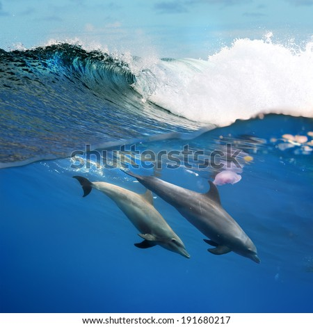 tropical diving a pair of dolphins playing under ocean breaking surfing wave  - stock photo