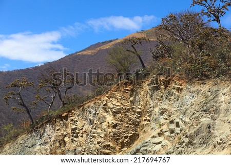 Tropical dry forest with cacti and trees overgrown with beard lichen (Usnea) on the top of a hillside in Loja Province in Southern Ecuador - stock photo