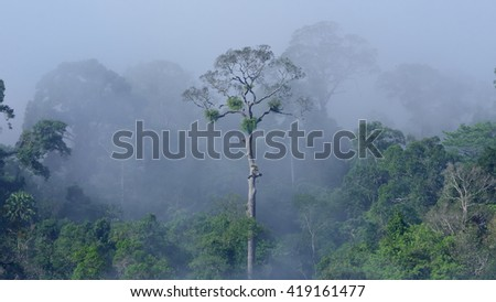 Tropical evergreen forest in the mist  - stock photo