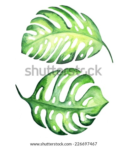 Tropical exotic leaves, monstera. Watercolor illustration. - stock photo