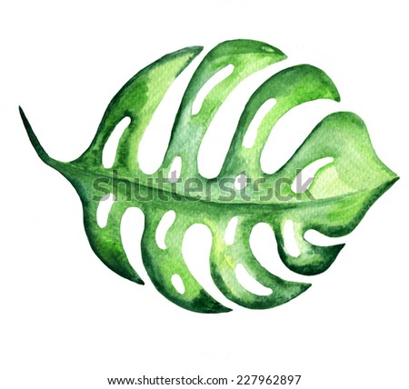 Tropical exotic monstera leaf. Watercolor illustration. - stock photo