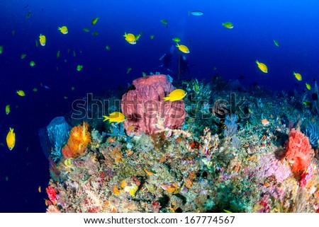 Tropical fish and a barrel sponge on a deep water coral reef - stock photo