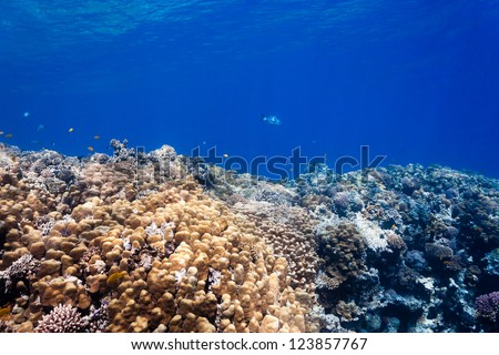 Tropical fish and hard porite corals in shallow water - stock photo