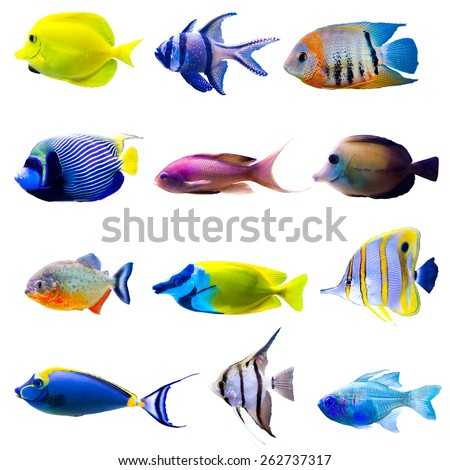 Tropical fish collection isolated on white background - stock photo
