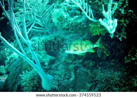Tropical fish in a coral reef - underwater photography background - stock photo