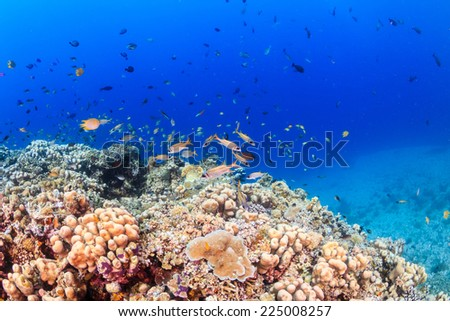 Tropical fish on a healthy coral reef - stock photo