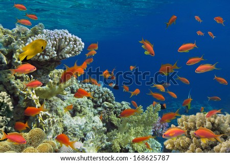 Tropical Fish on coral reef. - stock photo