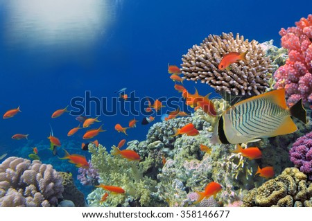 Tropical Fish on Coral Reef in the Red Sea. - stock photo