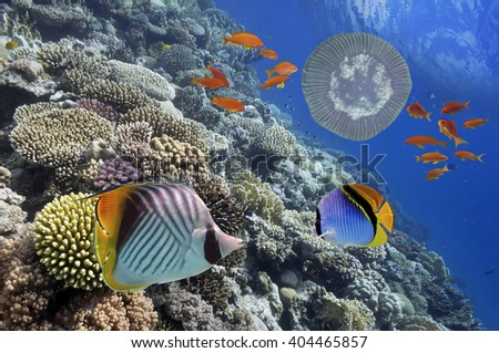 Tropical Fish on Coral Reef in the Red Sea, Egypt - stock photo