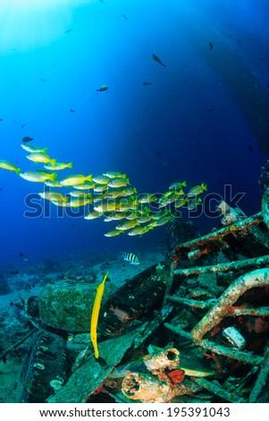 Tropical fish swim around debris near a disused oil rig - stock photo