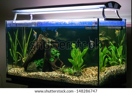 Fish tank stock photos images pictures shutterstock for Fish stock tank
