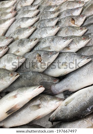 Tropical fishes at the thailand fish market of samui island  - stock photo