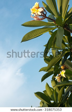 Tropical Flower in Singapore. - stock photo