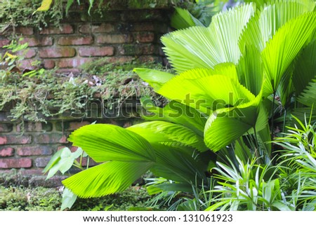 Tropical foliage background - stock photo