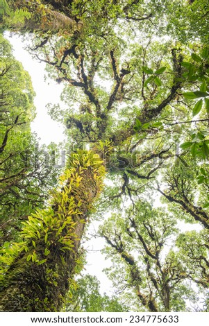 Tropical forest. - stock photo